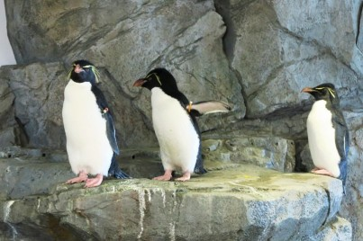 Osaka-Aquarium-Kaiyukan-penguin